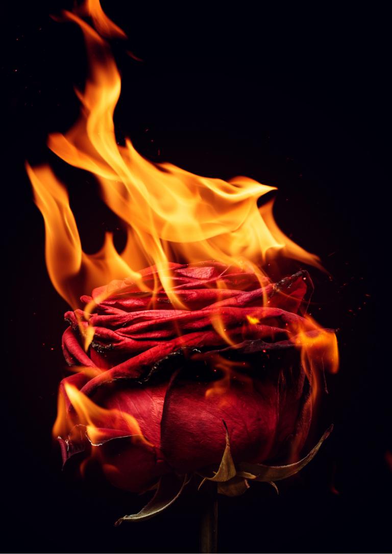 薔薇が燃えている画像