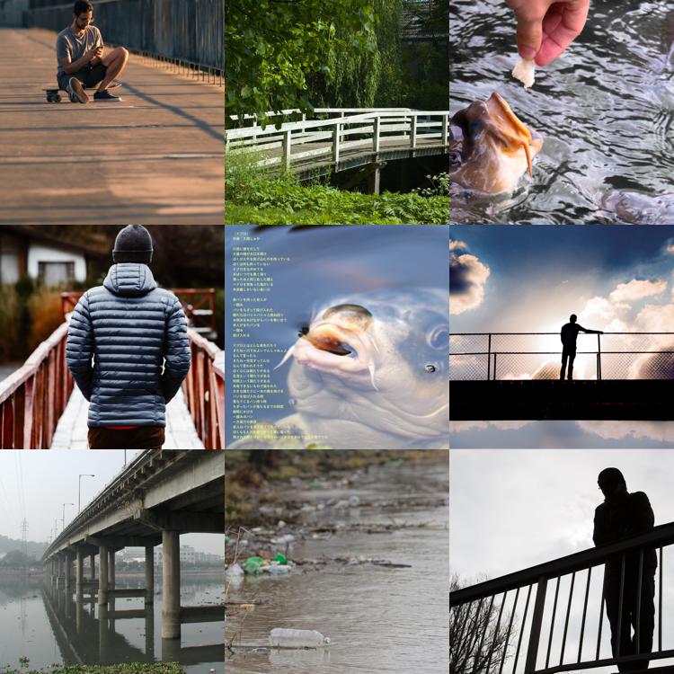 鯉の写真詩