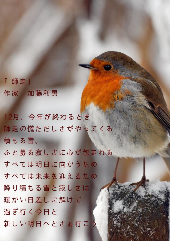 鳥の画像の写真詩
