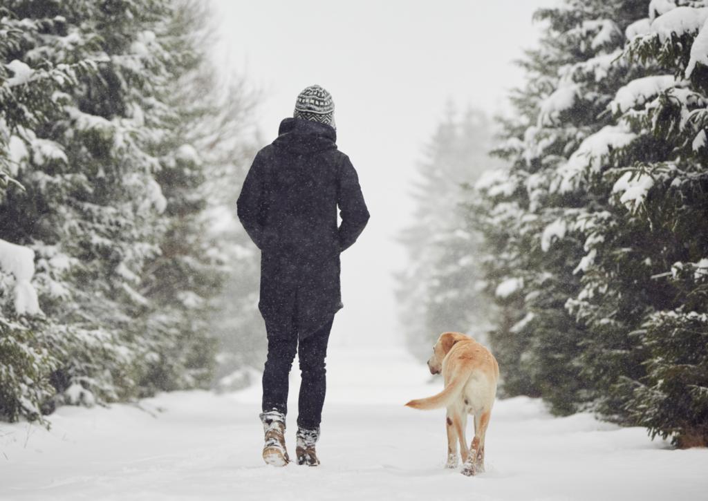 女性と犬の画像
