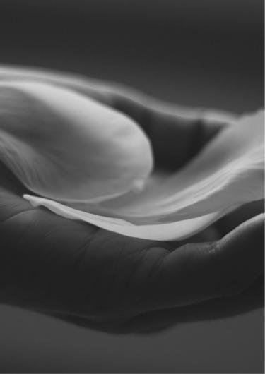 手のひらに花びらが乗った画像