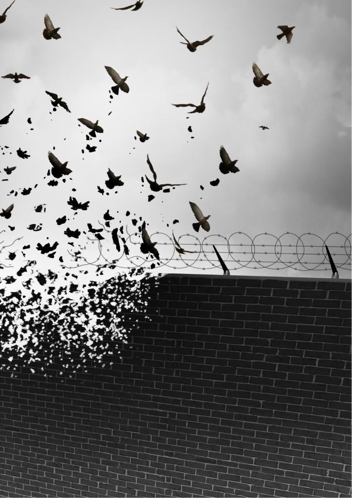 壊れた塀と鳥の群れの画像