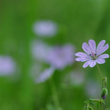 青い花の画像