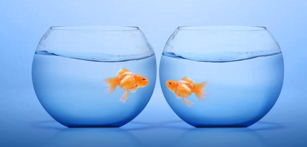 金魚鉢と金魚2つの画像